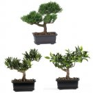 8.5 Inch Bonsai Silk Plant Collection