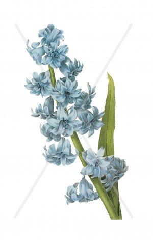 Vintage Blue Flowers digital collage sheet