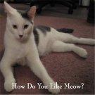 The Feline Corner item 1