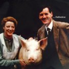 A Private Function 1984 color 8x10 photo man and woman posing with a pig