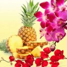 Pineapple Orchid (B&BW Dupe) GS3