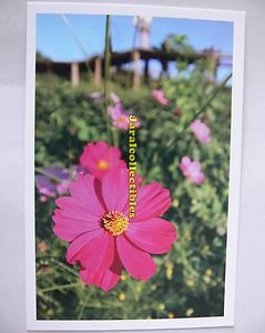 Postcard Flower Pink Gerbera Like Yellow Green Field Fresh Lively Touch Simple