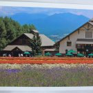 Postcard House Restaurant Flower Garden White Orange Purple Yellow Beautiful