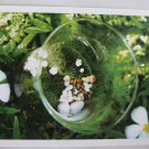 Postcard Flower Green Lychen Pebble White Brown Grass Glass Touch Simple NEW
