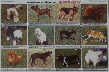 12 Different Lineage Dog Poster Collection Gift Poodle Bulldog Shepherd Photo