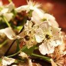 Blackthorns Fine Art Photo  8x10