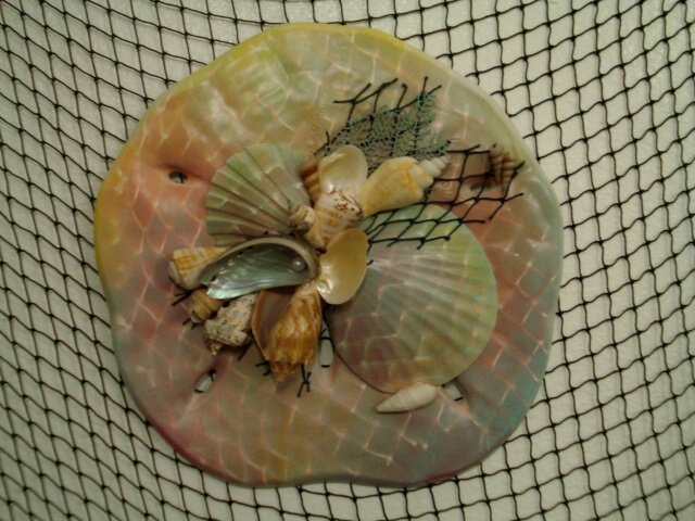 Sand Dollar Wall Plaque (multi color/dark green,sand,yellow)