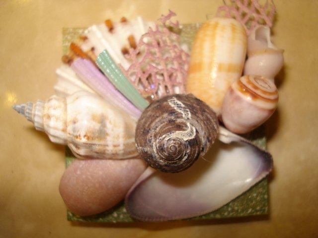 Seashell Magnet Large center shell