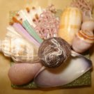 Seashell Magnet Large center shell