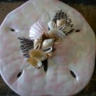 Sand Dollar Plaque Light Pink and White