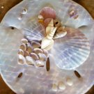 Sand Dollar Plaque light purple/blue pastel