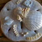 Sand Dollar Plaque Light Blue with Coral