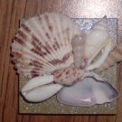 Magnet Green Background with Natural shells