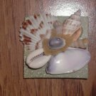 Magnet Green Background with Natural shells Purple Center shell