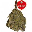 Oak Leaf Venik
