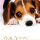 Bradley Joseph DVD FOR DOGS - WHILE YOU ARE GONE - DOG CARE  VIDEO NEW