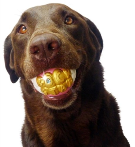 Funny Smile Dog Toy