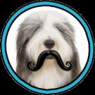 Humunga Stache Rubber Pet Dog Toy Fetch Ball Medium Junior