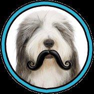 Humunga Stache Rubber Pet Dog Toy Fetch Ball Medium Junior