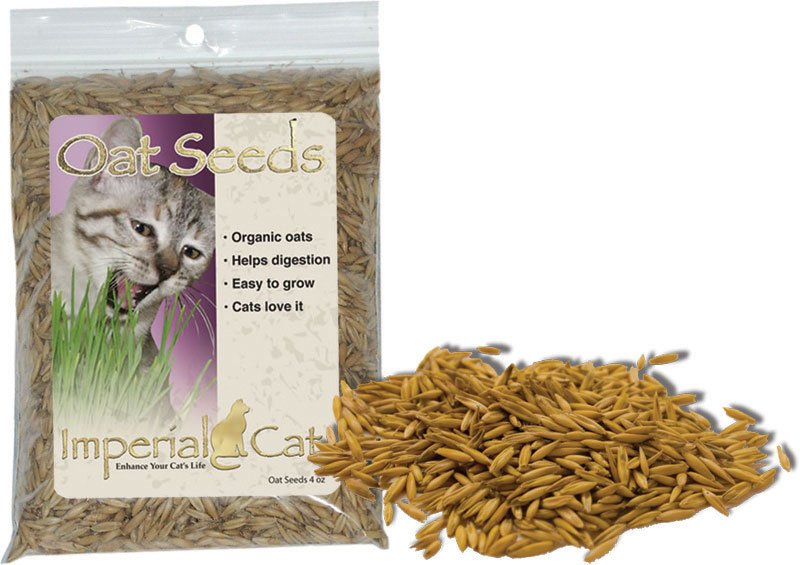 Snack 'n Treat Easy Grow Organic Oat Grass Seeds for Cats Pets