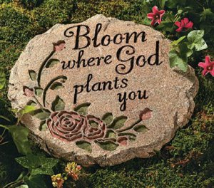 Rose Stepping Stone