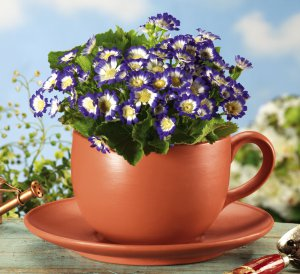 Whimsical Cup And Saucer Garden Planter