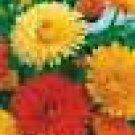 100 HEIRLOOM Pot Marigold  MIX  SEEDS