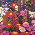 19 packets of. Perennial Seeds = 1900 Seeds plus 600 Annual Seeds gift Total 2400 gift