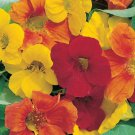 50 HEIRLOOM Nasturtium, Edible plant (vl) Mix SEEDS