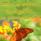 How to Attract Butterflies to your Garden.