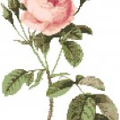 Redoute's Moss Rose Pattern Chart Graph