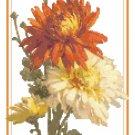 Chrysanthemums 2 Pattern Chart Graph