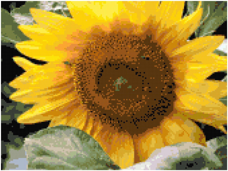 Cheerful Sunflower Pattern Chart Graph