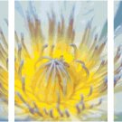 Blue Lotus Flower Triptych Pattern Chart Graph