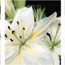 White Lilies Triptych Pattern Chart Graph