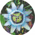 The Passion Flower Pattern Chart Graph