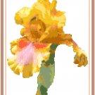 Golden Lady Iris Pattern Chart Graph