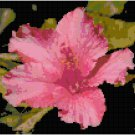 Vivid Pink Hibiscus Bloom Pattern Chart Graph