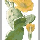 Prickly Pear Cactus 2 Pattern Chart Graph