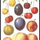 Cherries, Peaches and Plums Pattern Chart Graph