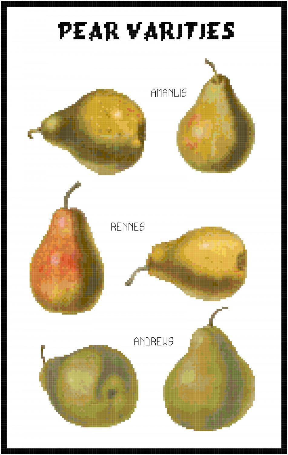 Pear Varieties Pattern Chart Graph on Color Number Fruit