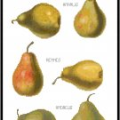 Pear Varieties Pattern Chart Graph