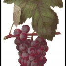 Bagrina Wine Grapes Pattern Chart Graph