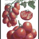 Tomato Varieties Pattern Chart Graph