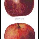 Apples 2 Pattern Chart Graph