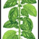 Basil Herb Pattern Chart Graph