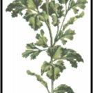 Parsley Herb Pattern Chart Graph
