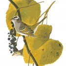 Audubon White Crowned Sparrow Pattern Chart Graph