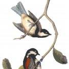 Audubon Chestnut Backed Chickadees Pattern Chart Graph