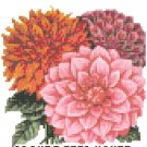 Dahlia Flower Seed Packet Pattern Chart Graph